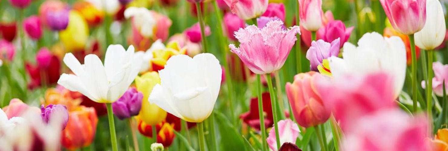 Afbeeldingsresultaat voor banner voorjaar